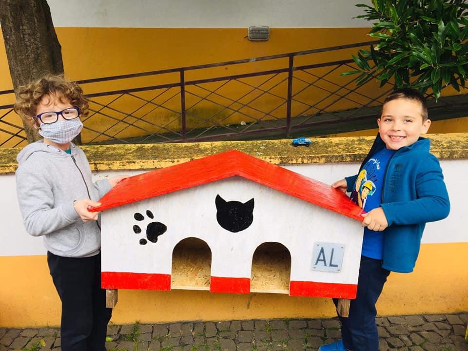 Casinhas de madeira para abrigar gatos de rua
