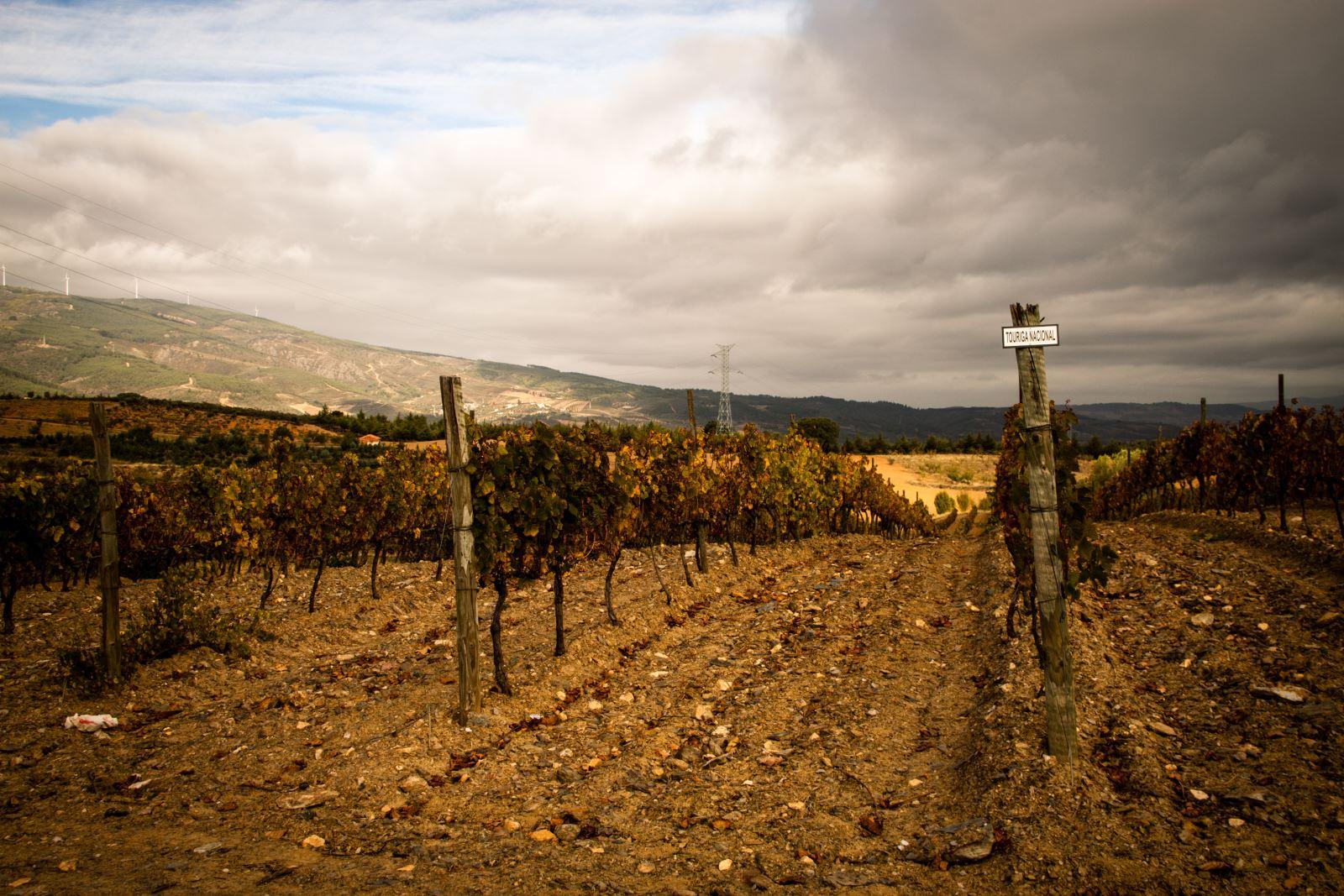 Produção vínica em prol da obra social