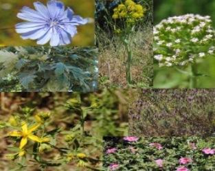 Canha | Passeio para observação de plantas úteis e medicinais