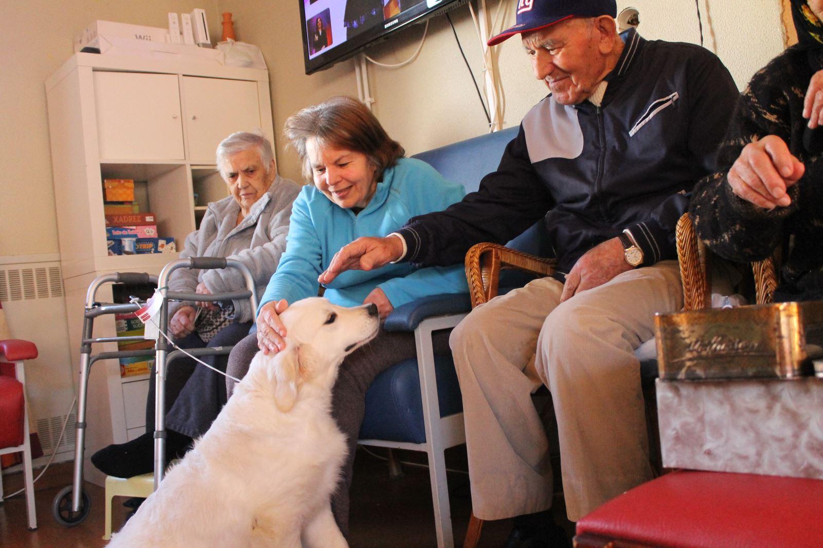 Murtosa | Promover emoções positivas com cães