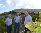 Fundão   Marca de vinho para os 500 anos