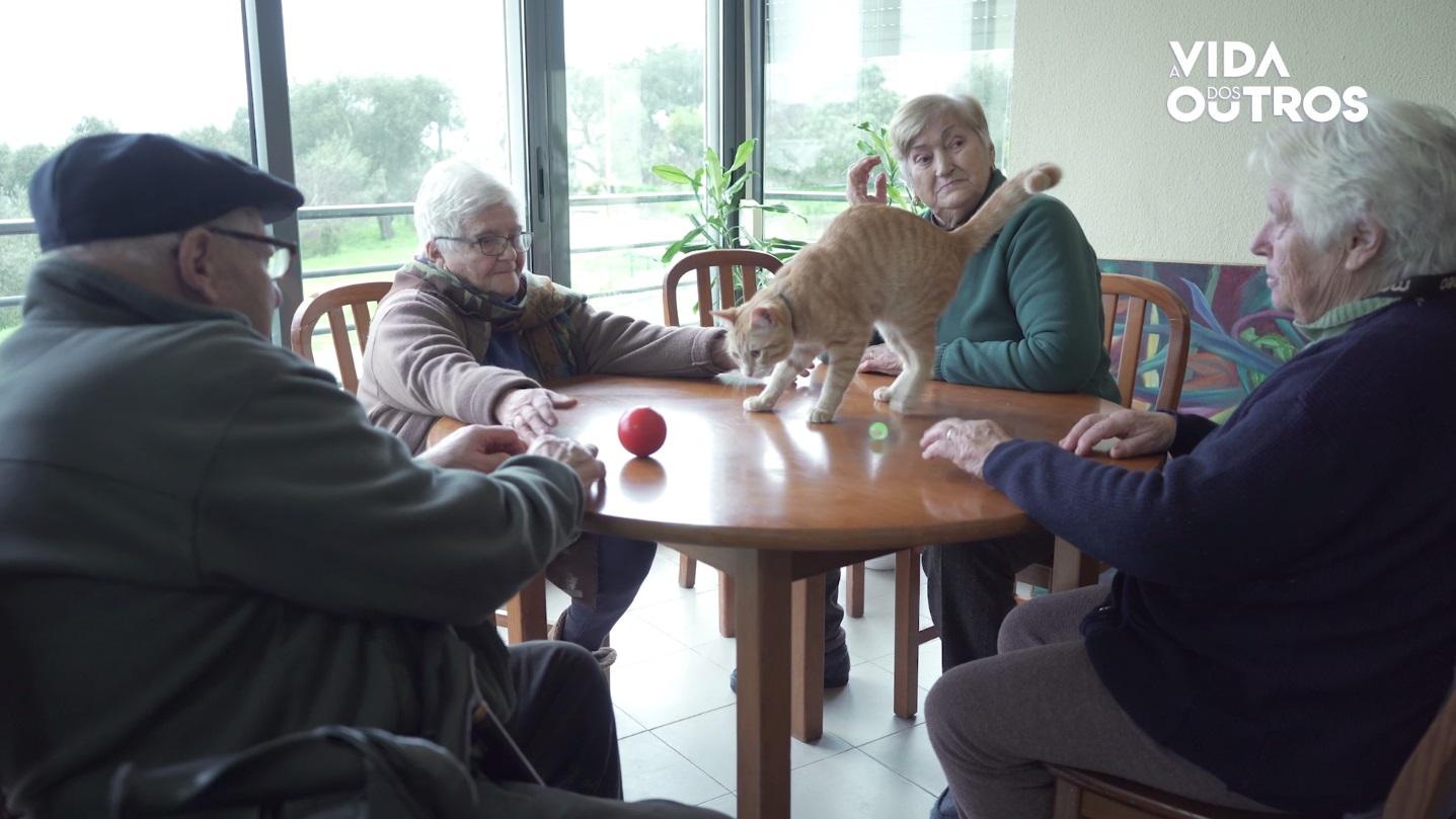 A Vida dos Outros | Gato 'Micas' é uma terapia para idosos da Misericórdia de Cardigos